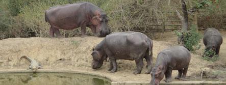 ZINIARE : Une journée au parc animalier de Blaise Compaoré