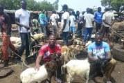 VENTE D'ANIMAUX DANS LES ARTERES  DE OUAGADOUGOU : Des acteurs de la filière interpellent le  maire