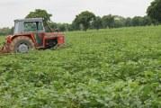 CREATION D'UNE BANQUE AGRICOLE AU BURKINA  : Le monde paysan en tirera-t-il réellement profit?