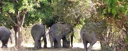 Photo of COMMUNE DE TIEFORA :  Au moins 4 personnes tuées par des éléphants