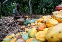 Photo of LA COTE D'IVOIRE ET LE GHANA FACE AUX MULTINATIONALES AMERICAINES DE CHOCOLAT
